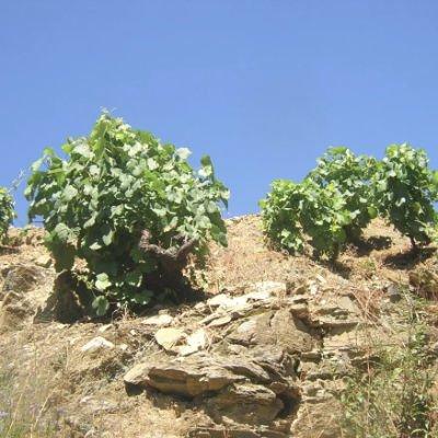 ver viñedos en cangas